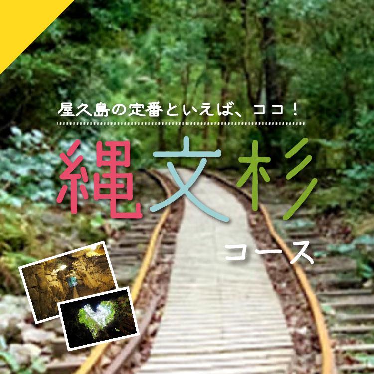 屋久島の定番といえば、ココ!縄文杉コース